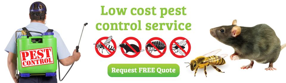 Pest Control Penang