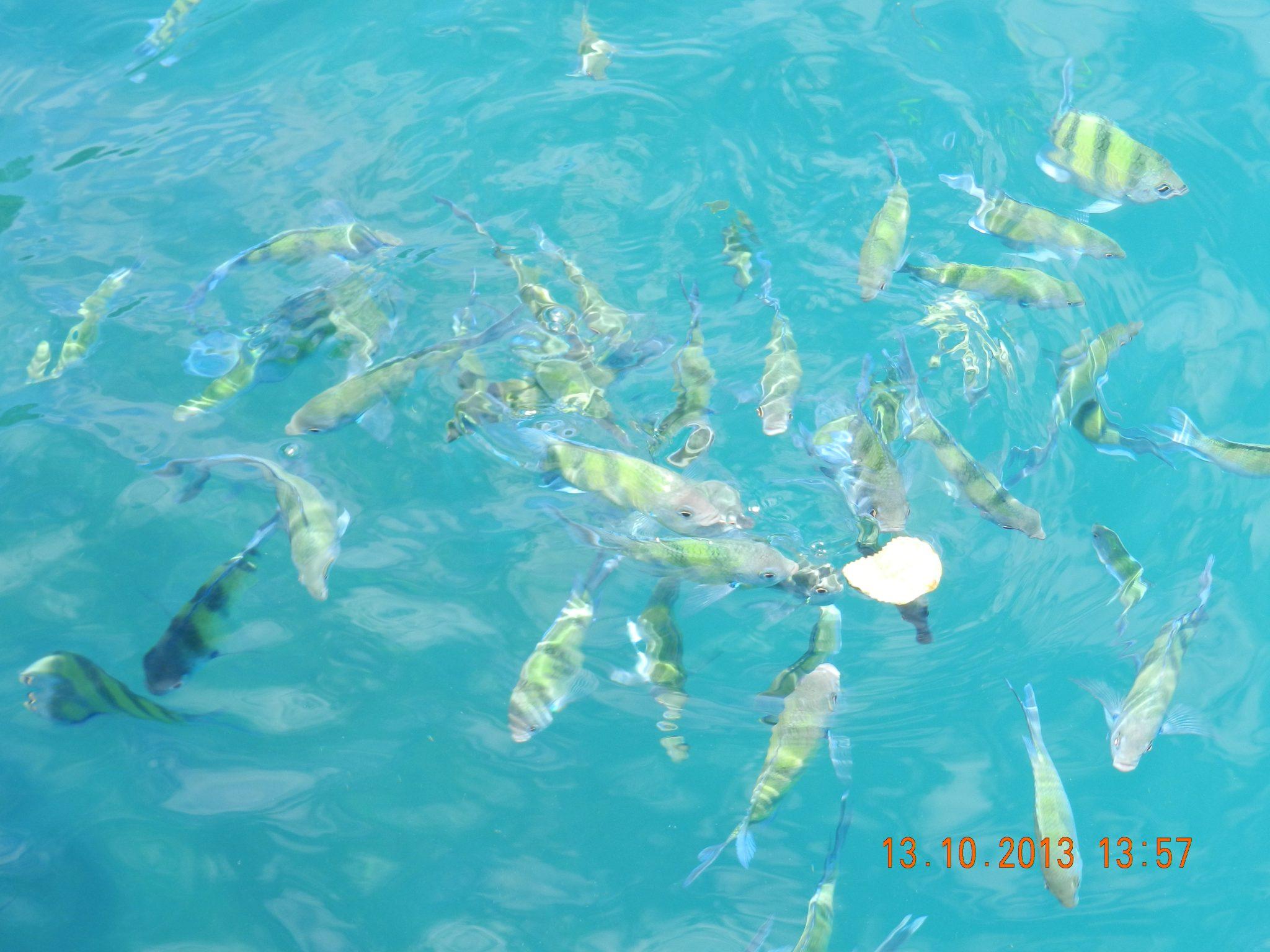 Krabi – Hat Yai