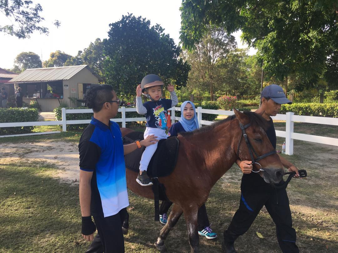 Horses for Young Hippotherapy